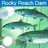 RockyReachDam